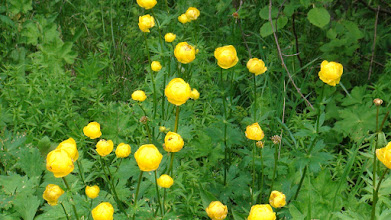 Photo: Цветы