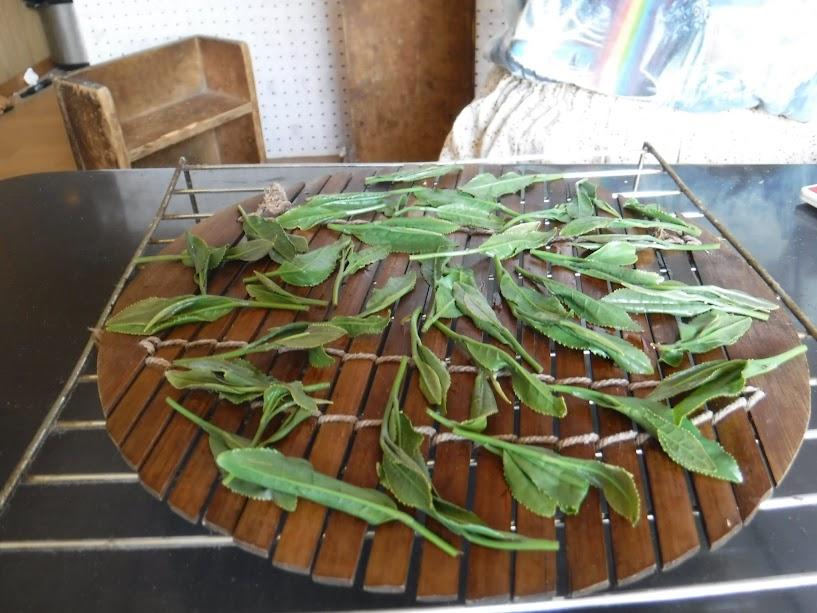 竹の上でお茶の葉を冷ます。うちわであおぎます