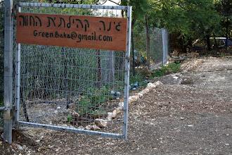Photo: הגינה ממשיכה להתפתח - 10/8-2013 (צילום: רמי)