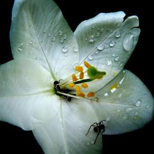 flowers & leaves (84).JPG