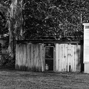 Shedbw by Grady  Welch - Black & White Buildings & Architecture ( shed, b&w, white, black, black and white )
