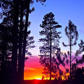 Ponderosa Sunset by J.c. Phelps - Landscapes Sunsets & Sunrises (  )