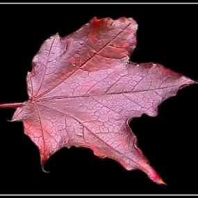 by Mikhail Romanovski - Nature Up Close Leaves & Grasses (  )