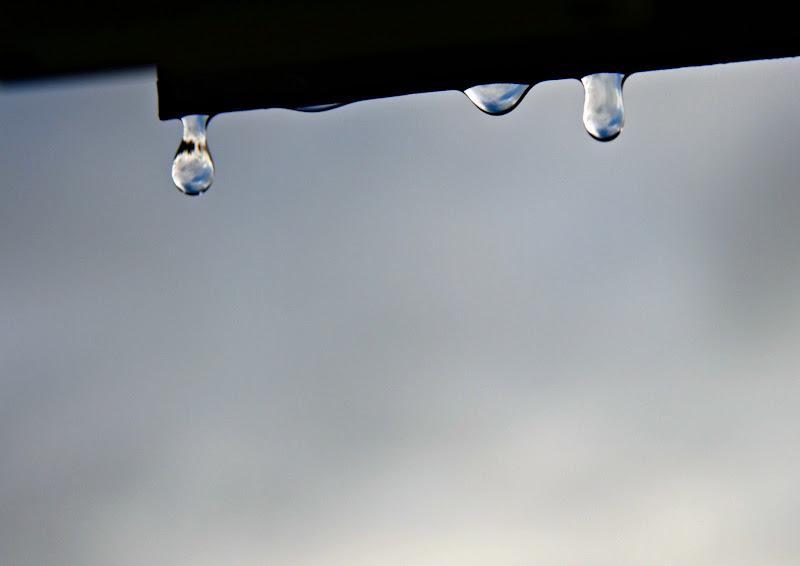 A drop di michi2695