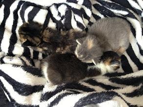 Photo: Mia's Kittens 1