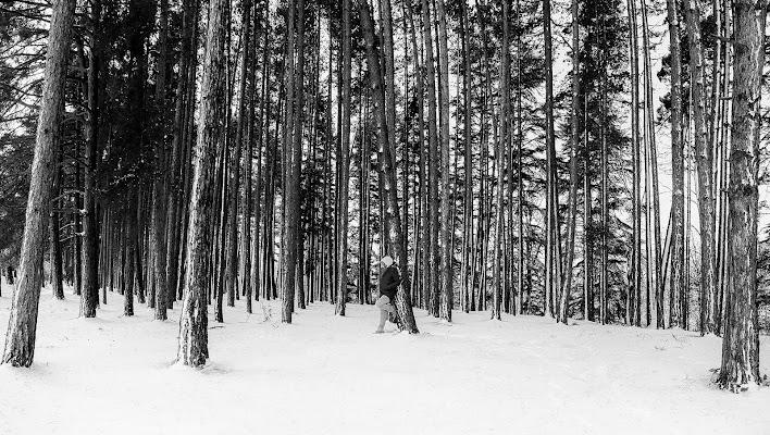 Silenzio nel bosco di Christian Gatti