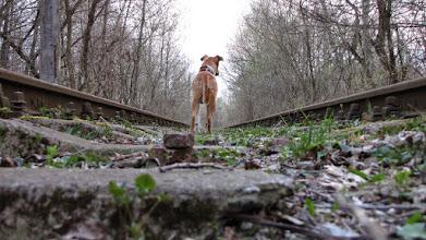Photo: Nieczynne tory kolejowe niedaleko Zegrza