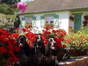 Photo: Agatha, Amstel-Free des aubépines de La.Vilco et Angel Blue de la Coquinière devant notre maison.