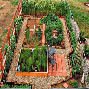 Vegetable garden ideas android apps on google play for Vegetable patch ideas