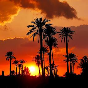 sunset in the Moroccan desert by Fred Goldstein - Landscapes Sunsets & Sunrises ( date, sunset, morocco, desert, trees,  )