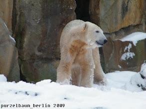 Photo: Spaziert Knut erst einmal eine Runde durch den Schnee ;-)