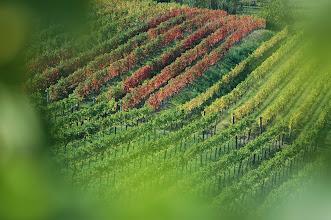 Photo: Prelepe barve Brd / Beautiful colors of Brda