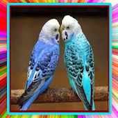 Sounds Of Parakeet Mp3 Android APK Download Free By Abdou Ress Dev