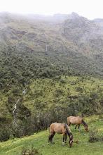 Photo: A los caballitos el clima no les preocupa mucho Mollepata - Machupichu Semana Santa 2015