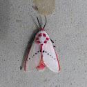 Rosy Ermine Moth