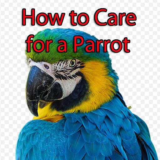 如何照顧鸚鵡