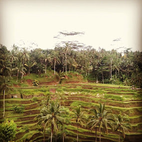 by Yudya Daton - Instagram & Mobile Instagram ( iphone, tegalalang, riceterrace, bali, ubud, instagram, likes )