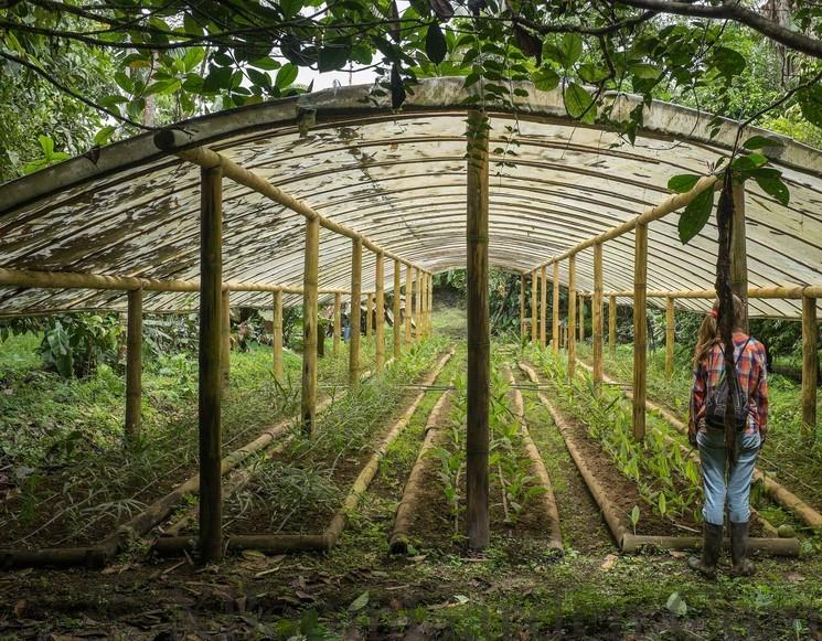 Types of Greenhouses for Home Use – X Boom Garden