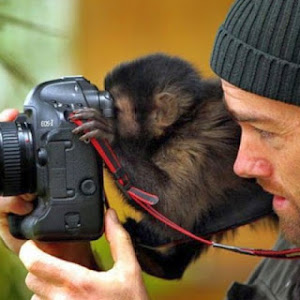 monkey-photographer-wallpaper-funny-backgrounds-26864.jpg