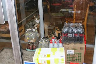 Photo: Bar à chat - Paris XIe