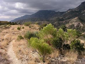 Photo: Along the Arizona Trail, Rincon Mountains, Saguaro National Park, Arizona