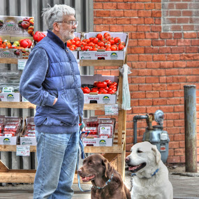 Good dogs! by Guy Longtin - City,  Street & Park  Street Scenes