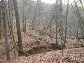 Photo: Sunutí velkých objemů nadložních hornin po křídovém podkladu dobře viditelné na šikmo rostoucích stromech (13.1. 2014).