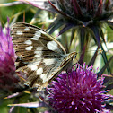 The marbled white