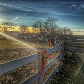 Beautiful horse North Randolph Ma  by Paul Gibson - Landscapes Prairies, Meadows & Fields ( fence, hdr, sunset, ribbon, massachusetts )