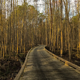 by Dee Haun - Buildings & Architecture Bridges & Suspended Structures ( wooden road, forest, curved, road, 180226t2071e2, early morning, iphone, landscape,  )