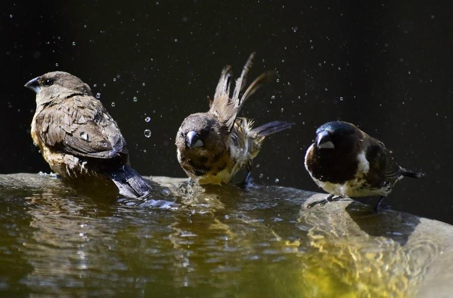 by Gisela Scott - Animals Birds