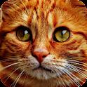 Gatos icon