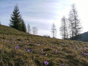 Photo: na fiolet nie trzeba było długo czekać ;)