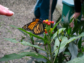 Photo: Inside the butterfly habitat