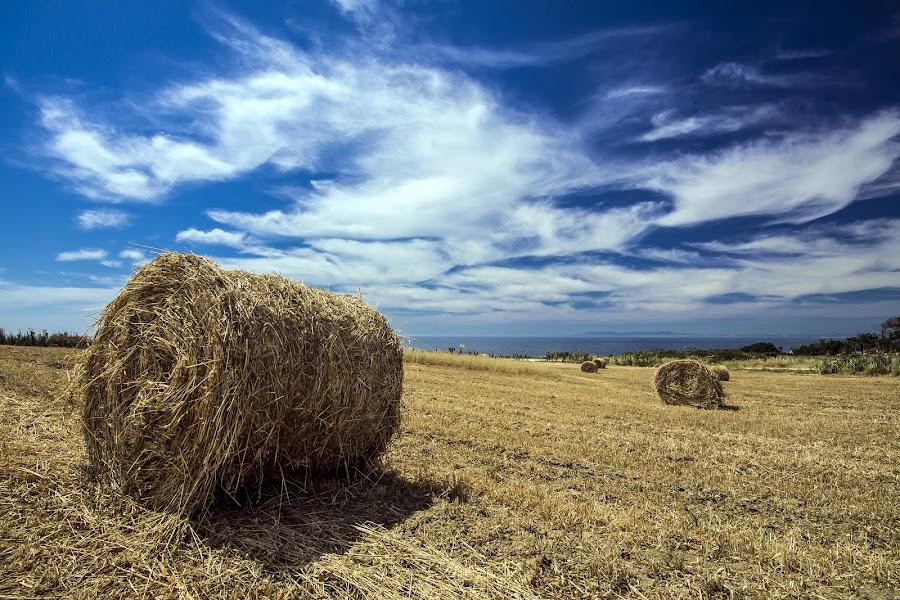 Farming by Paulo Mendonça - Landscapes Prairies, Meadows & Fields