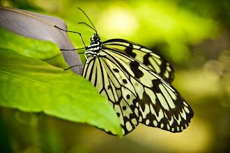 Photo: Schmetterling