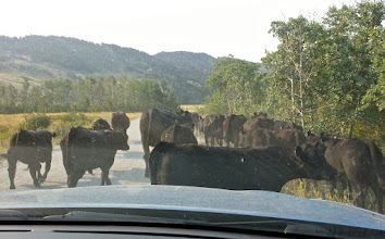 Photo: On Benchmark Road west of Augusta - butt to butt traffic