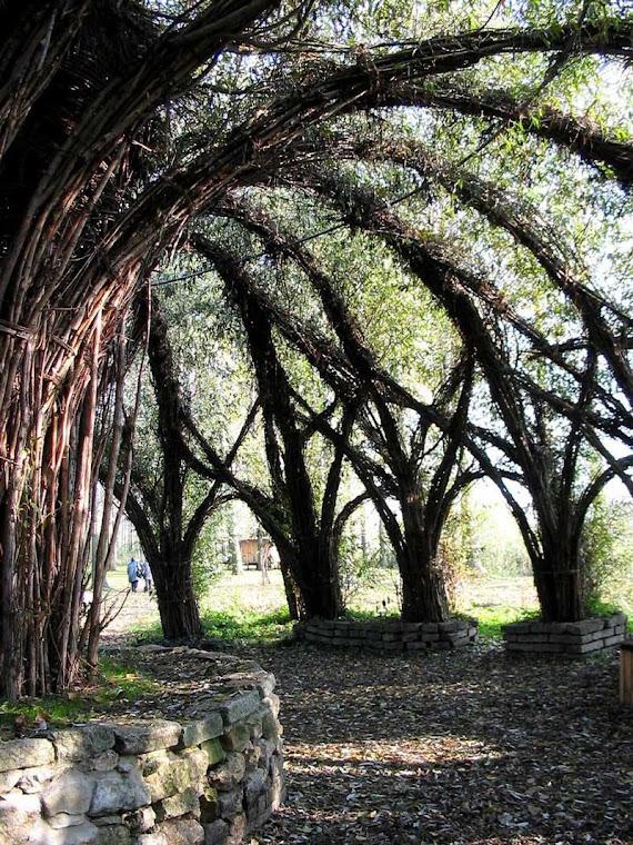 Arboescultura, a arte de moldar a natureza
