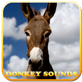 Donkey Sounds
