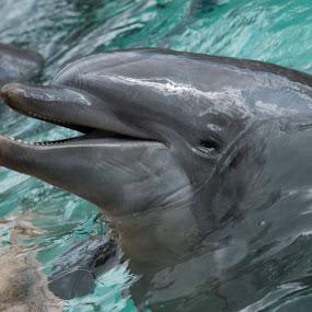 Dolphins by Matt Stevens - Animals Sea Creatures (  )