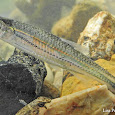 Freshwater Fishes of the Southeastern US