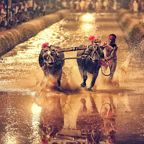 Kambala, Buffalo Race, India by Soumya Geetha - Sports & Fitness Other Sports