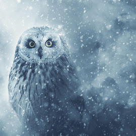 Owl in snow by Marius Birkeland - Digital Art Animals ( bird, blue, snow, edit, owl )