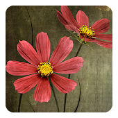 Flowers on wood Live Wallpaper