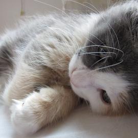 by Alegna Nehc - Animals - Cats Kittens (  )