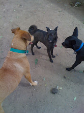 Photo: Malia at the Plaza Mitre dog park in Buenos Aires