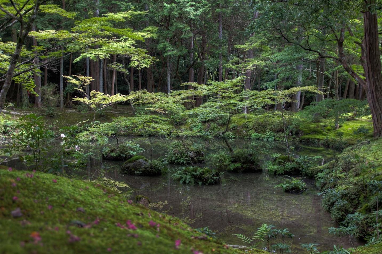 Kokedera saihoji der moostempel in kyoto japan kyoto - Moosgarten kyoto ...