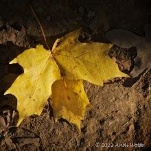 Photo: Autumn color
