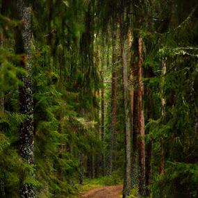 by Marie Gillander - Landscapes Forests