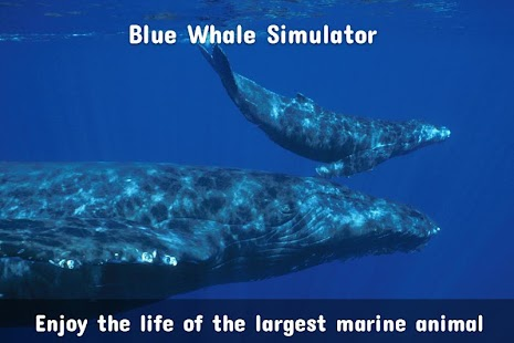 Blue Whale Simulator : Blue Whale VR Screenshot
